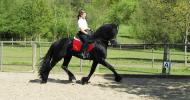 Алюрите на коня