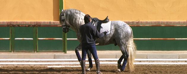 Андалузки кон (Andalusian)