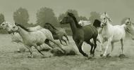 От див в домашен кон