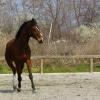 Естествените взаимоотношения – Natural Horsemanship