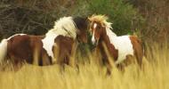 Жестове и поведение на конете