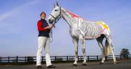Как се изучава анатомията на кон? Като го боядисате