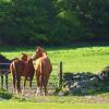 Възпитание на конете по естествен начин по методиката на Пат Парели