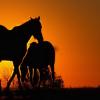 """Пат Парели – Как да станеш """"естествен"""" ездач"""