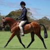Правилната позиция на краката по време на езда