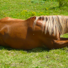 Parelli Natural Horsemanship Level 1, part 2