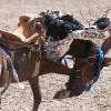 Родео (Saddle Bronc Riding)