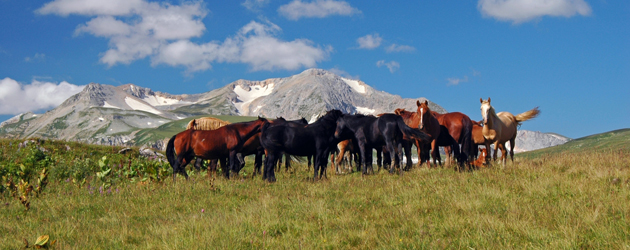 Каракачански кон (Karakachan)