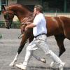 Тренировъчна скала на ездача