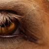 Психологията на конете –Част 5