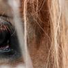Психологията на конете –Част 1