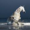 Терски кон (Tersk Horse)