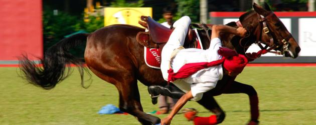 Циркови коне репетират по 12 часа дневно