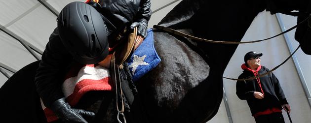 Как да познаем здравия кон?