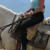 Контакт с поводите при езда