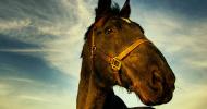Тренировъчна скала на коня – Част 3 – Контакт