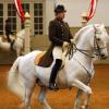 Работа от земя с коня