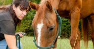 Заразни болести при конете