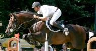 Датски топлокръвен кон (Danish Warmblood)