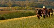 Конят – нещо повече от работно добиче