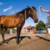 Заслужете уважението на коня