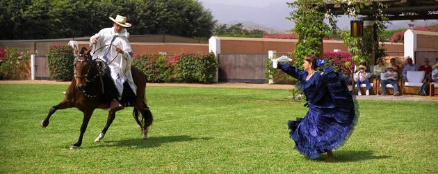 Перуанско пасо (Peruvian Paso Horse)