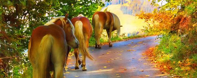 Хората, конете и листата