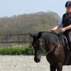 Фундаментална тренировка на конете