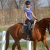 Основни принципи на тренинг на конете