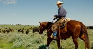 Добрият пасажер или независимата стойка при езда – Пат Парели