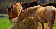 Съвети за храненето на конете