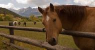 Пасищно отглеждане на коне