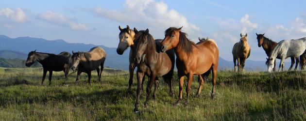 Паспорт на конете