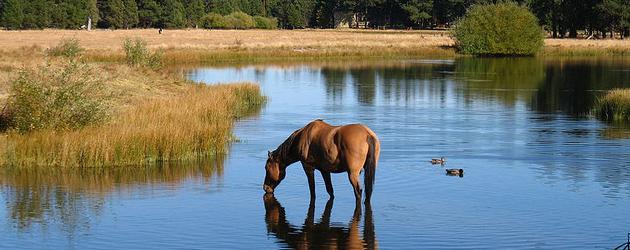 Водата и правилното хранене на конете