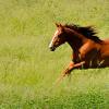 Линия на Плевенските коне