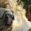 Как конете използват звуците – Част 1