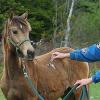 Подготовка и тренинг на малки кончета