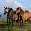 Предпазване и видове паразитни заболявания при конете