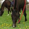 Изхранването при конете зависи от възрастта