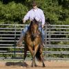 Да научим коня да пристъпва встрани