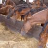История на коневъдството в България