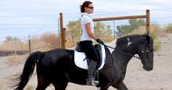 Видове алюри при спортните коне