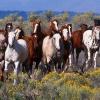 Генетика на цветовете при конете