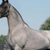 Ген за окраска Роан при конете