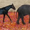 Защо и четирите колена на слона са отпред, а при коня две са отпред и две – отзад?
