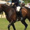 Латерални движения по време на езда
