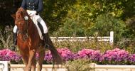 Огъвкавете коня с флексии