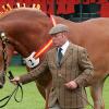 Суфолкски кон (Suffolk Horse)