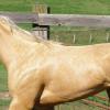 Ген за цвят крем при конете