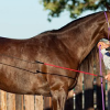 Downunder Horsemanship – отношението на човека към коня